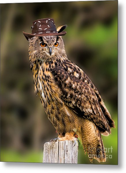 Eurasian Eagle Owl With A Cowboy Hat Metal Print
