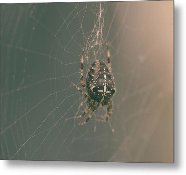 European Garden Spider B Metal Print