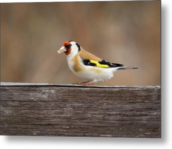 Metal Print featuring the photograph European Goldfinch In Kenosha by Ricky L Jones