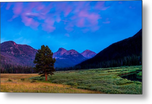 Evening At Christmas Meadows Metal Print