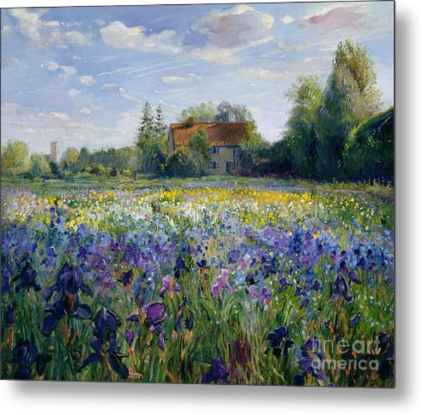 Evening At The Iris Field Metal Print