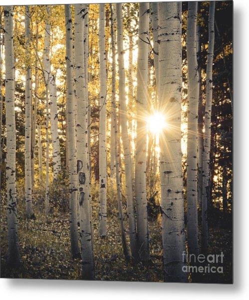 Evening In An Aspen Woods Metal Print