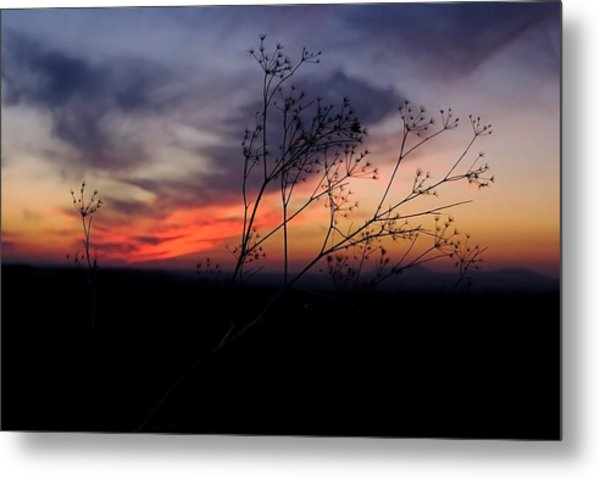 Evening Light Over Meadow Metal Print