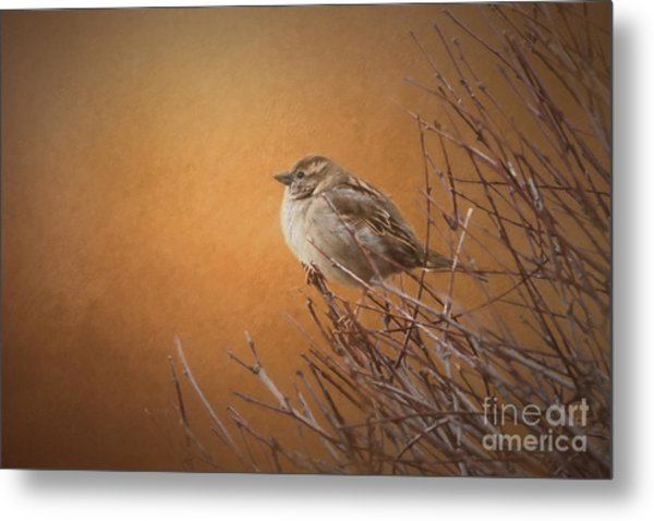 Evening Sparrow Song Metal Print