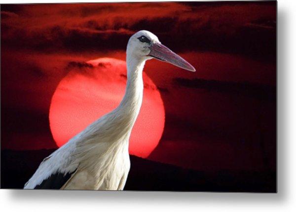 Evening Stork  Metal Print