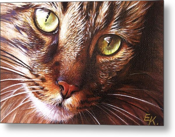 Evening Tabby Metal Print