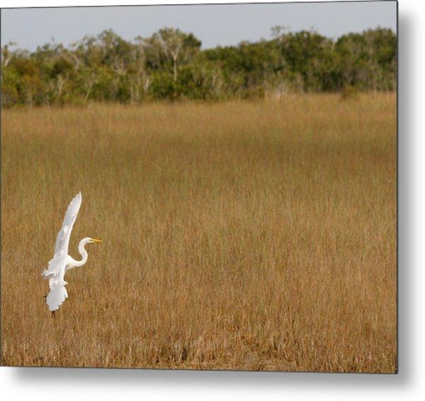 Everglades 429 Metal Print