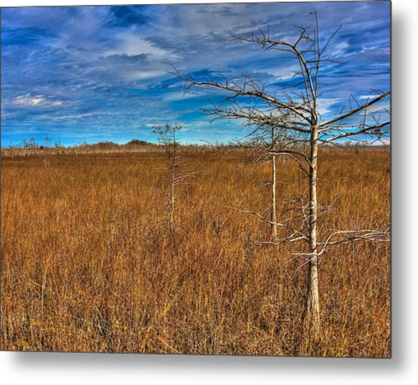 Everglades Metal Print by William Wetmore