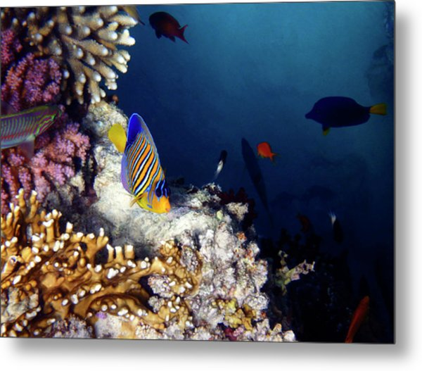 Exciting Red Sea World Metal Print