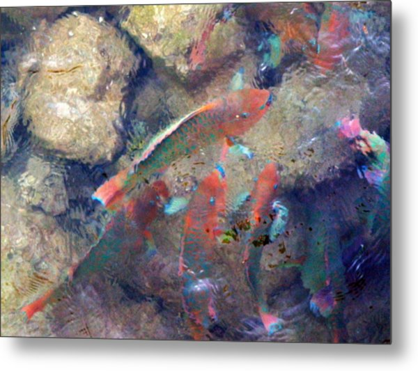 Exotic Fish Metal Print