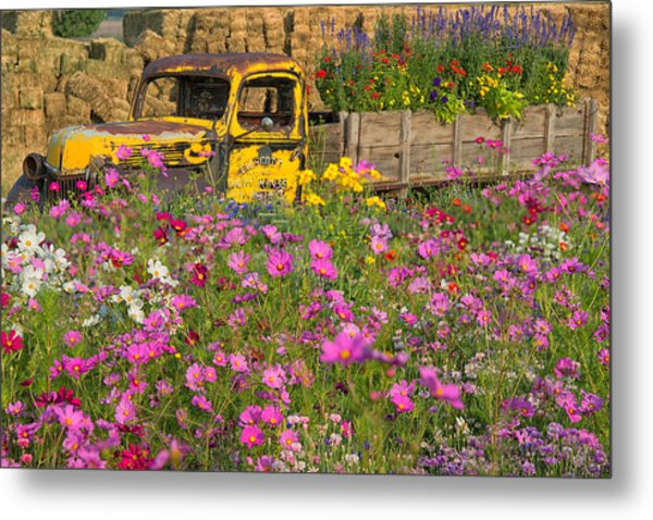 Metal Print featuring the photograph Explosion Of Wildflowers by Darlene Bushue