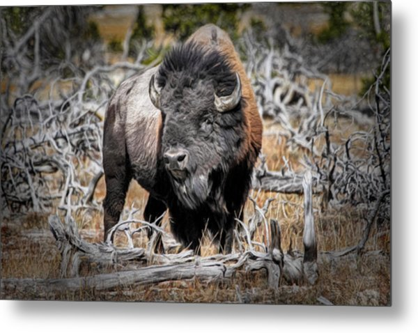 Eye Of The Buffalo Metal Print