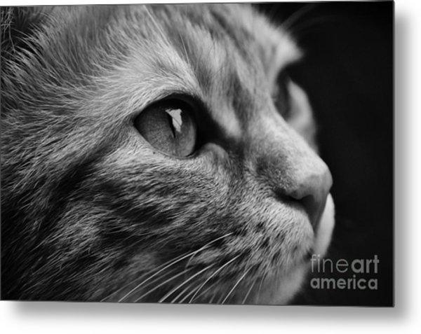 Eye Of The Cat Metal Print