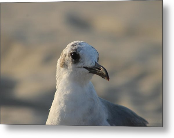 Eye Of The Gull Metal Print