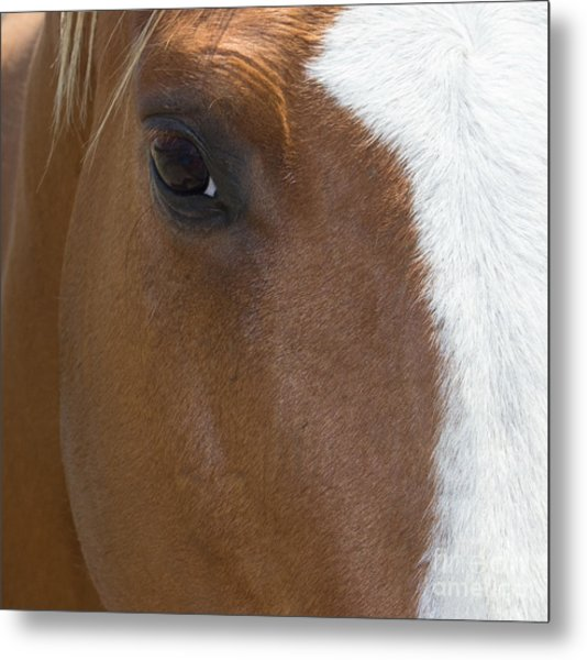 Eye On You Horse Metal Print