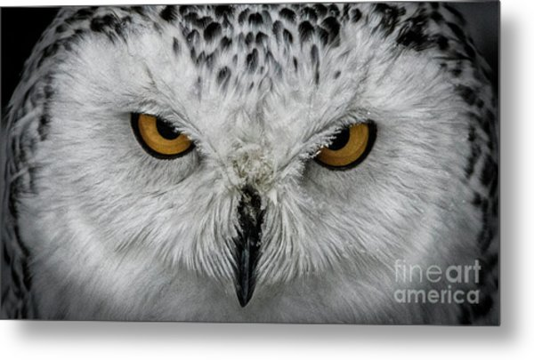 Eye-to-eye Metal Print