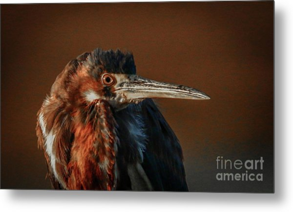 Eye To Eye With Heron Metal Print