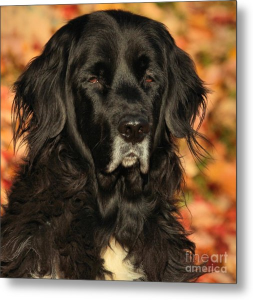 Eyes Of Autumn Metal Print