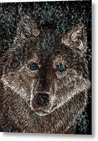 Eyes Of The Snow Wolf Metal Print by Nick Gustafson