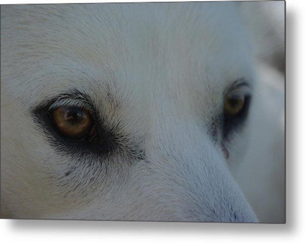 Eyes Of The Wolf - In Her Eyes Metal Print