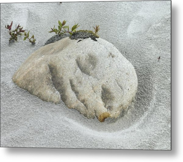 Face In The Sand At Baird Glacier Outwash Metal Print