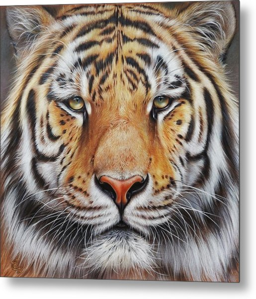 Faces Of The Wild - Amur Tiger Metal Print