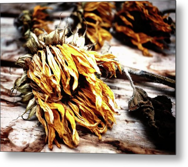 Faded Away Metal Print