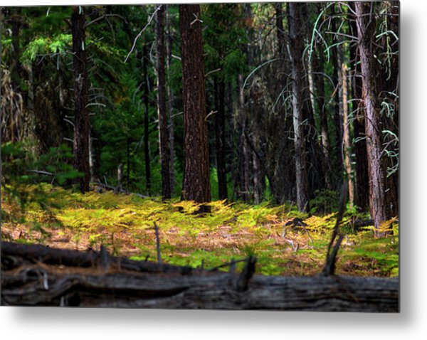 Cascade Mountain Range Fading Ferns Metal Print