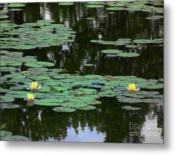 Fairmount Park Lily Pond Metal Print