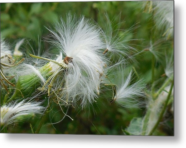 Fairy Flower Metal Print