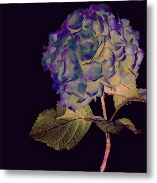 Metal Print featuring the mixed media Fairy Hydrangea by Susan Maxwell Schmidt