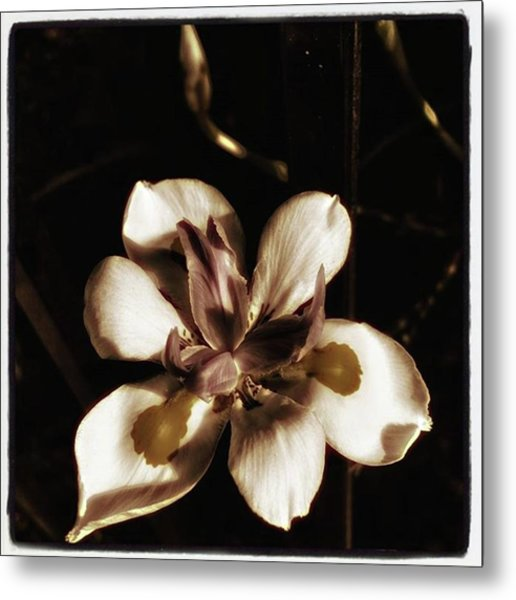 Metal Print featuring the photograph Fairy Iris. A Butterfly Landed On My by Mr Photojimsf