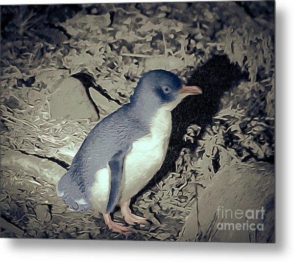 Fairy Penguin Tasmania Metal Print