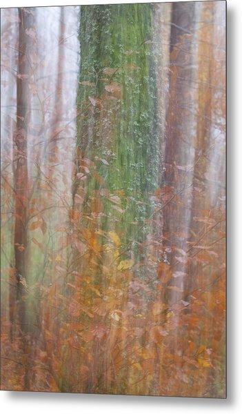 Fairy Tree Metal Print