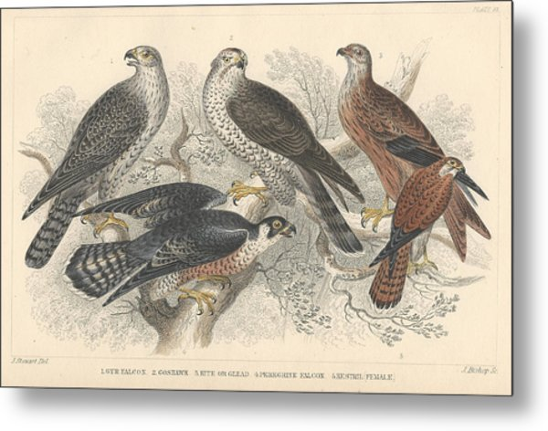 Falcons Metal Print