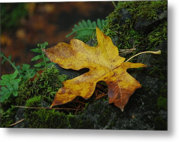 Fall Alone Metal Print by Lori Mellen-Pagliaro