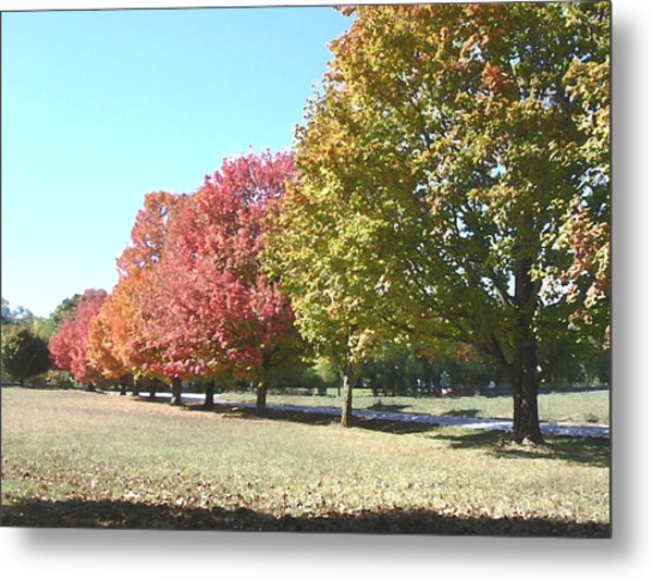 Fall Metal Print by Audrey Venute
