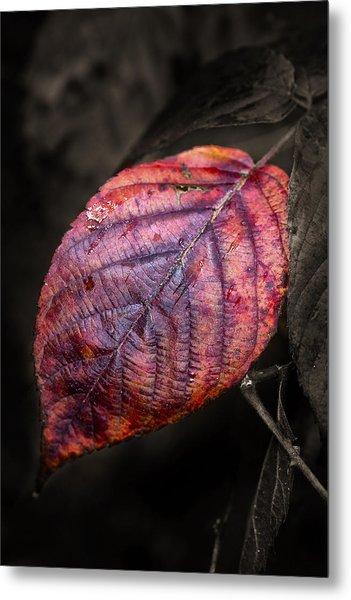 Fall Beech Leaf Metal Print
