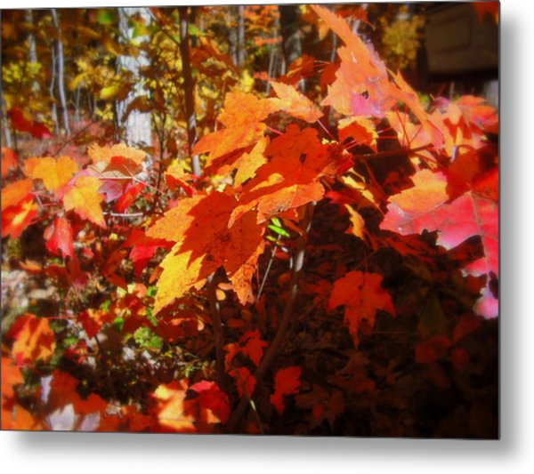 Fall Color 2 Metal Print by John Julio