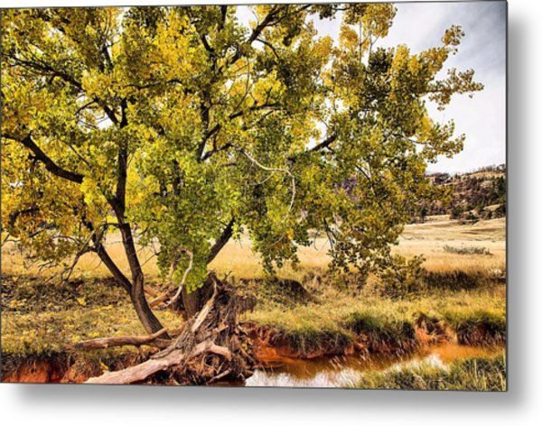 Fall Color Metal Print