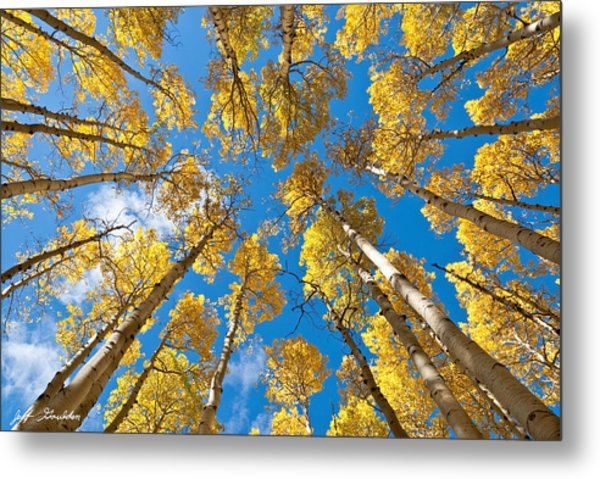 Fall Colored Aspens In The Inner Basin Metal Print