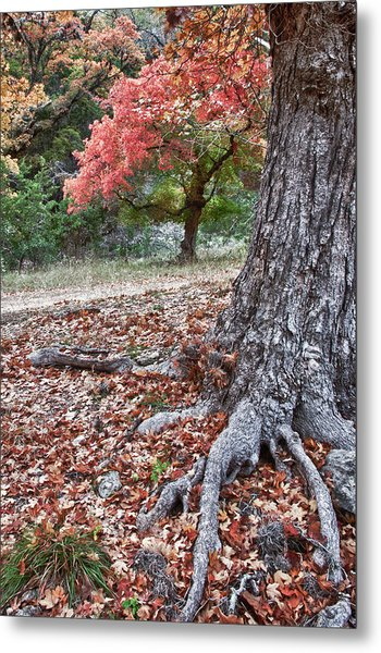 Fall Colors At Lost Maples Metal Print