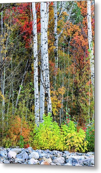 Metal Print featuring the photograph Fall Colors by Bryan Carter