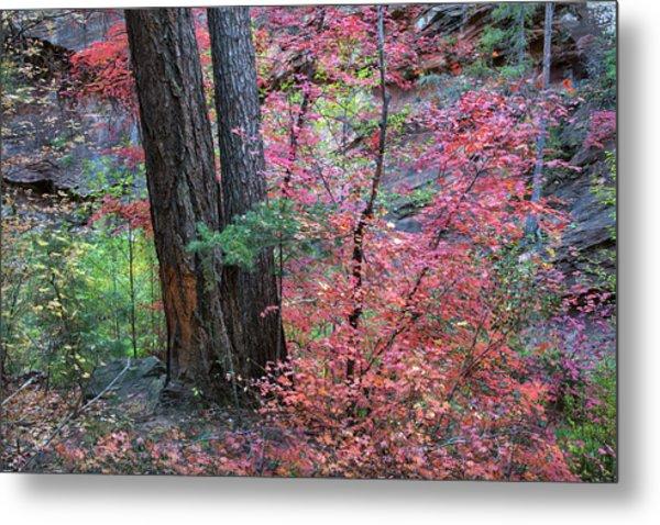 Fall Colors In West Fork Of Oak Creek Canyon Metal Print