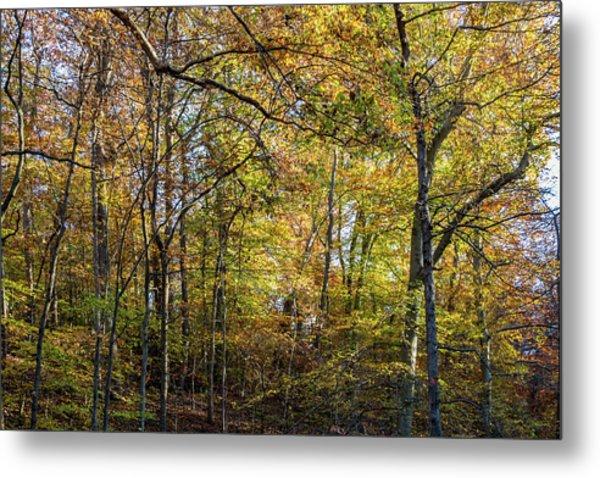 Fall Colors Of Rock Creek Park Metal Print