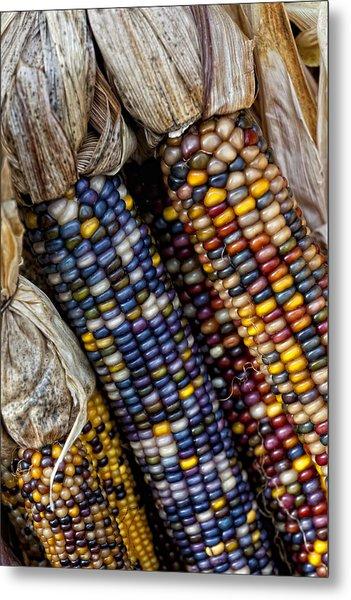 Fall Corn Metal Print