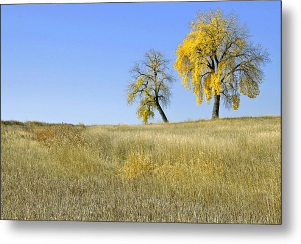 Fall Days In Fort Collins Co Metal Print