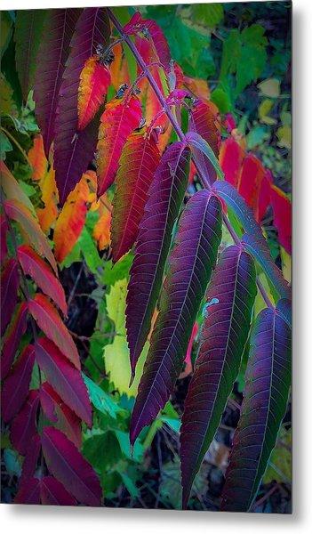 Fall Feathers Metal Print