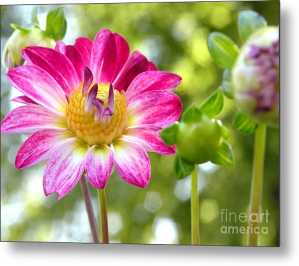 Fall Flower Garden Metal Print by Christine Belt