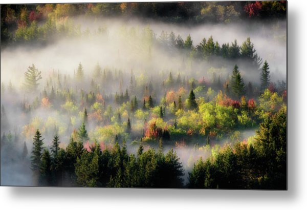 Fall Fog Metal Print